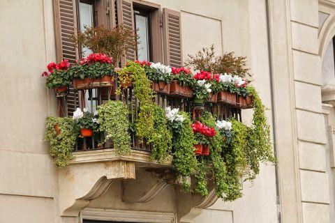 niewymagające kwiaty na balkon